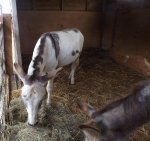 follys farm donkey sanctuary02.JPG