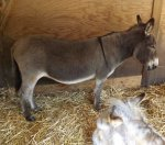 follys farm donkey sanctuary07.JPG