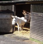 follys farm donkey sanctuary11.JPG