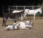 follys farm donkey sanctuary13.JPG