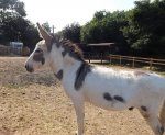 follys farm donkey sanctuary16.JPG